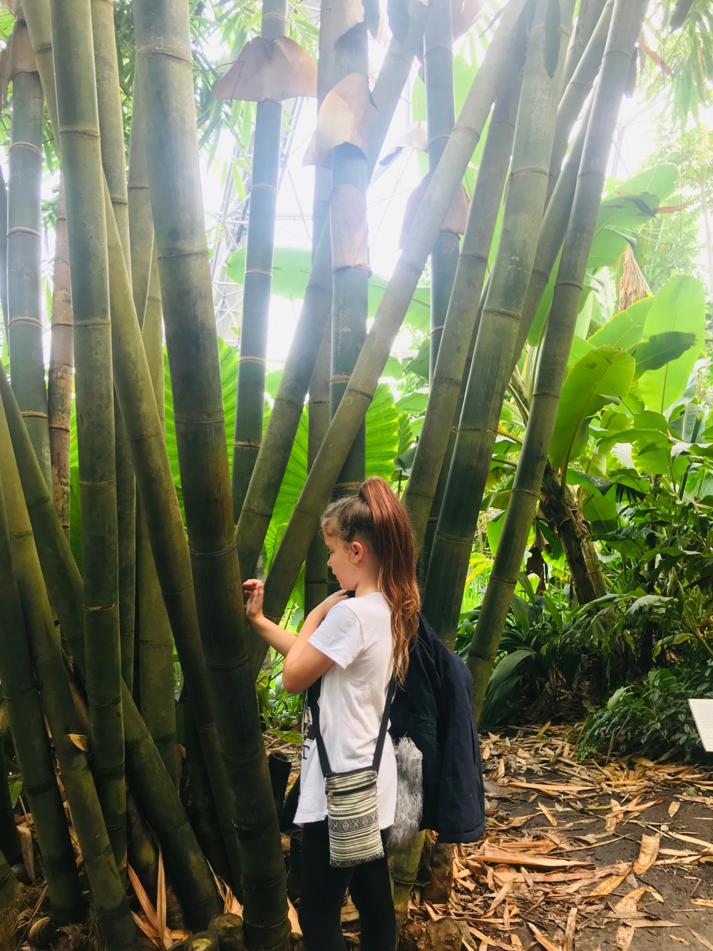 The Eden project - nay nays adventure